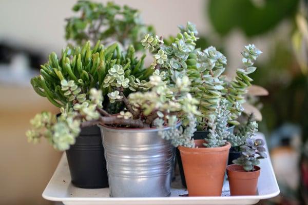 houseplantsspringblog